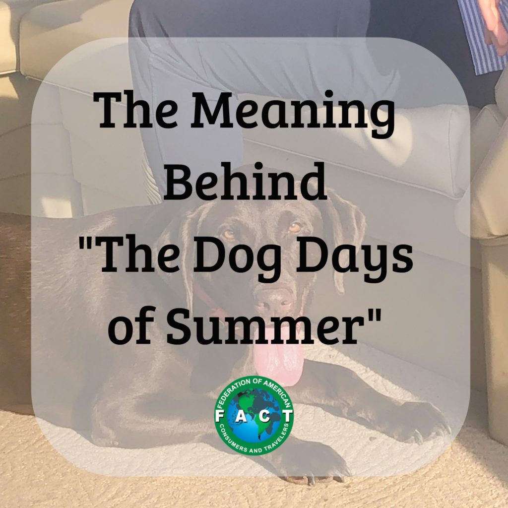 The Dog Days of Summer Photo